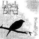 Blackbird thumbnail