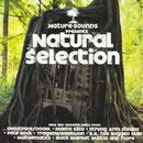 Natural Selection thumbnail